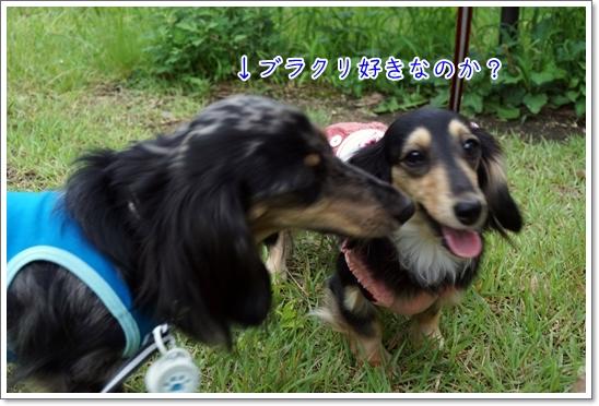 DSC03368.jpg