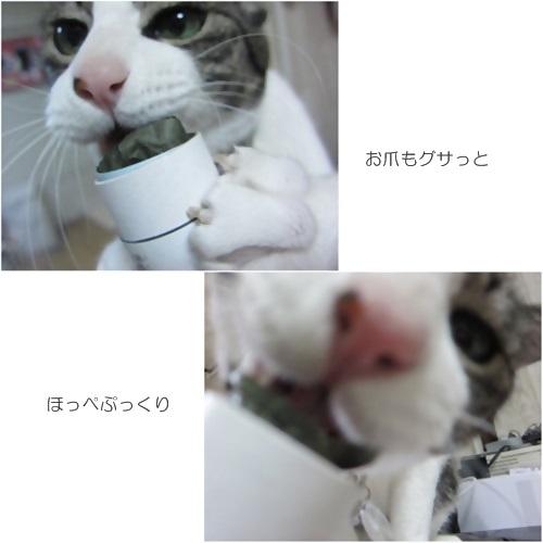 catsおつめ