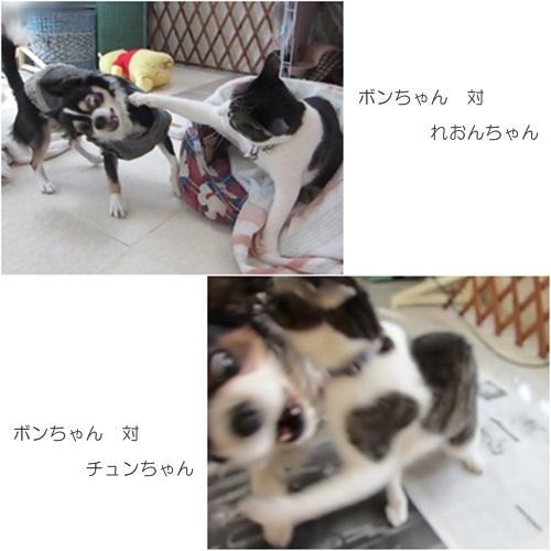 cats1_20160410183757fbc.jpg