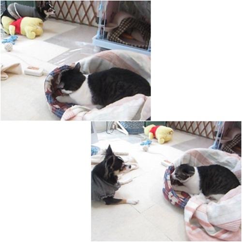 cats_20160410183654fe8.jpg