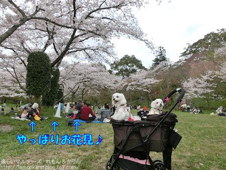 20160419_8.jpg