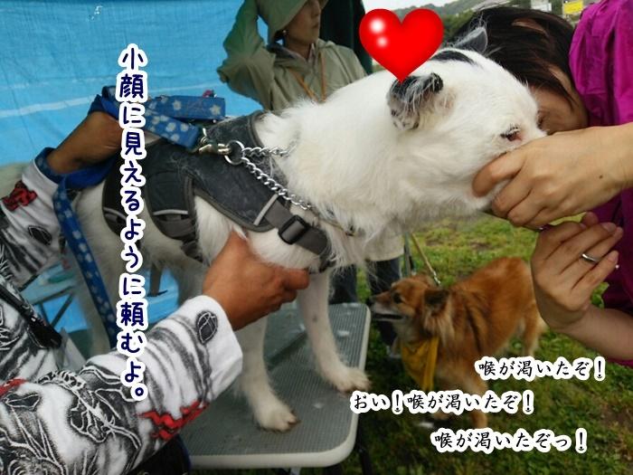 DSC_1715_20160609192903534.jpg