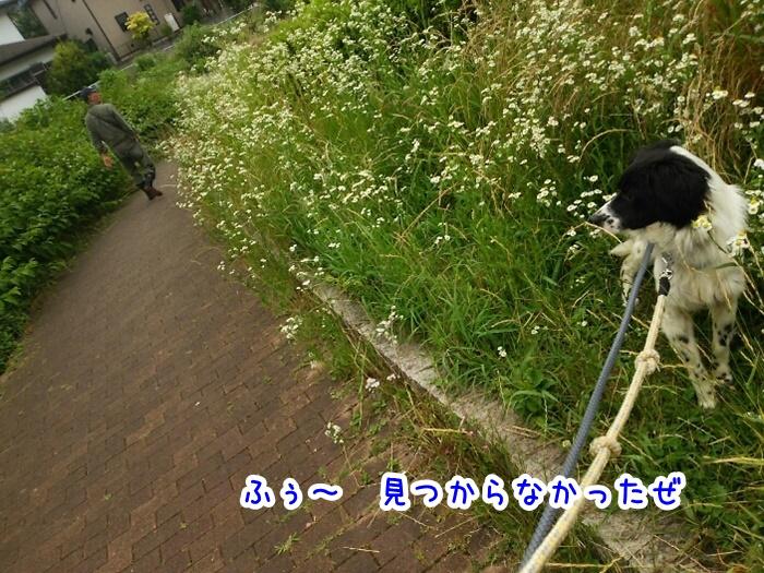 DSC_1762_20160614133020d4f.jpg
