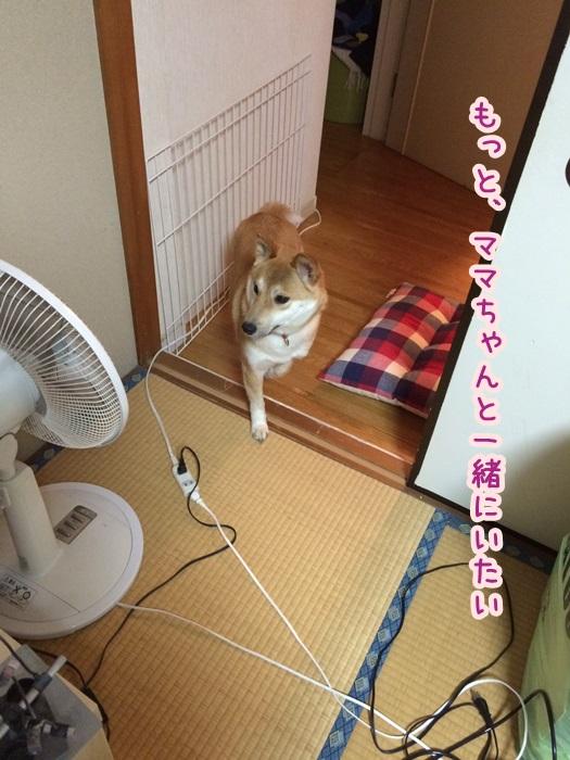 S__385183.jpg