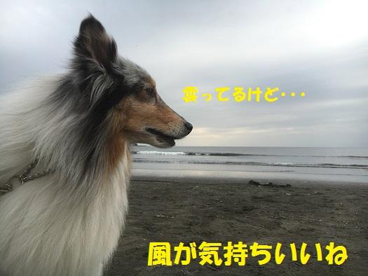 お散歩91