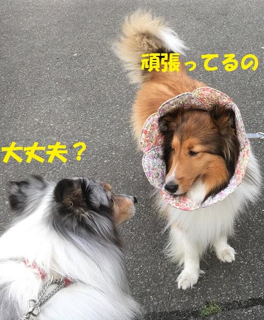 お散歩96
