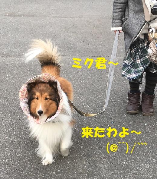 お散歩95