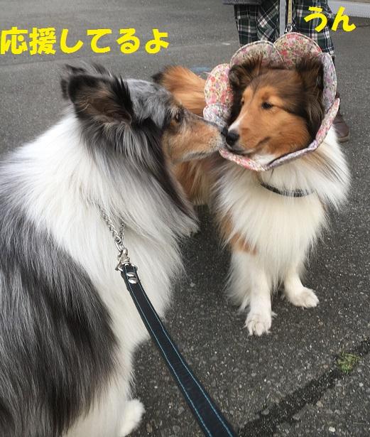 お散歩97