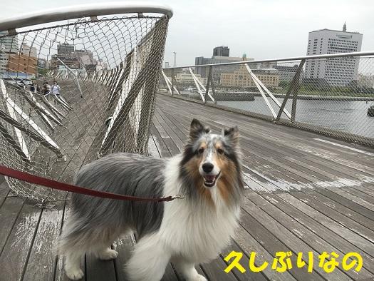 横浜へ97