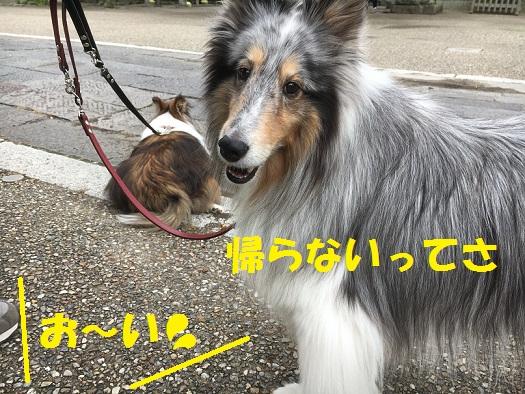 鎌倉994