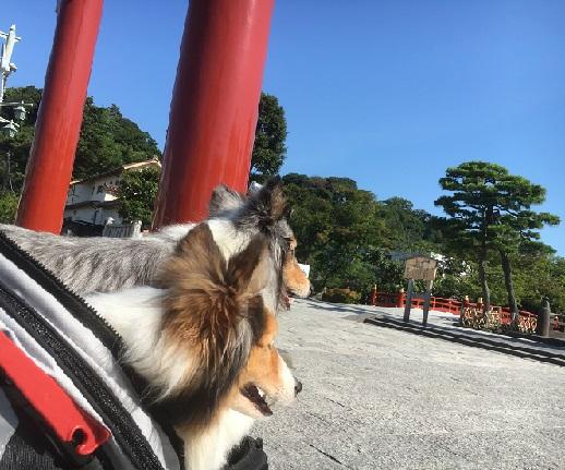鶴岡八幡1