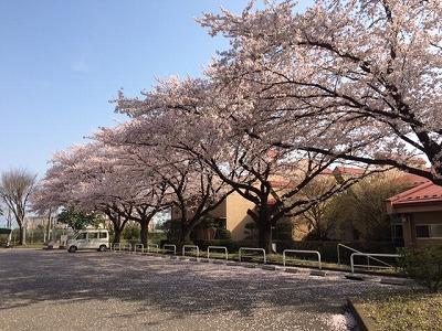sakura chuushajou