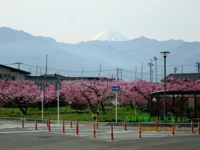 春日居町駅前公園で桃畑と富士山