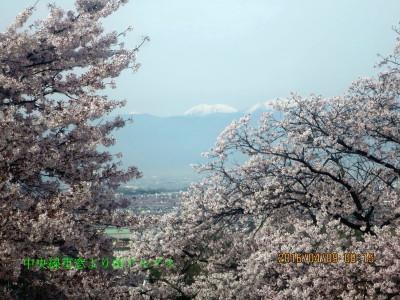 車窓から満開の桜と南アルプス風景