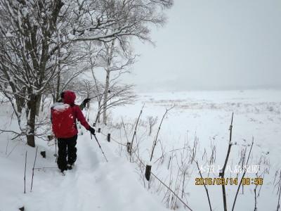 八島湿原に沿って木道を行く