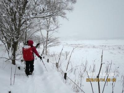 八島湿原に沿って木道を歩く