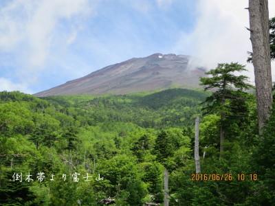 倒木帯より富士山
