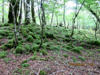 素晴らしい苔岩、苔絨毯