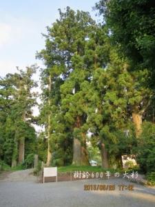 大銀杏の木と村山浅間神社本殿
