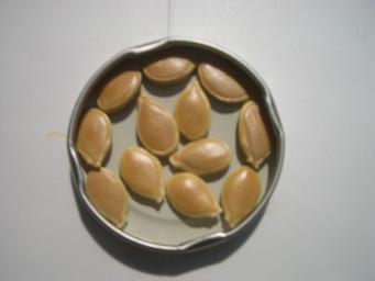 カボチャの種