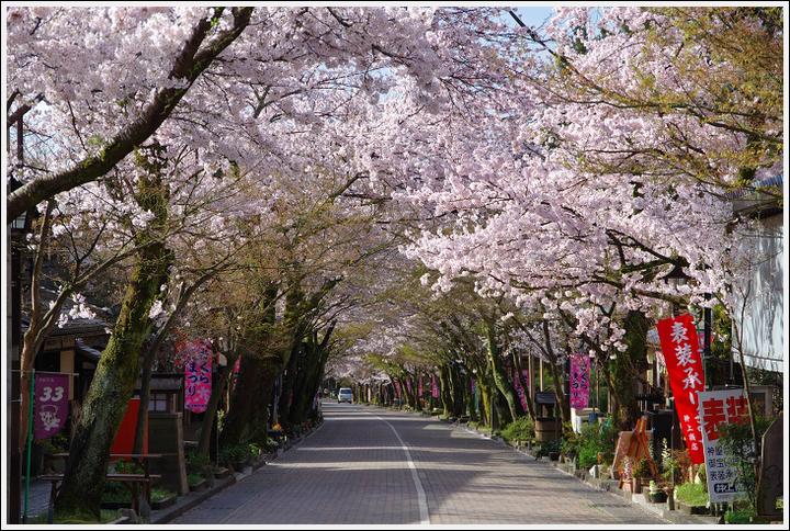 2016年4月5日 根尾谷の薄墨桜 (9)