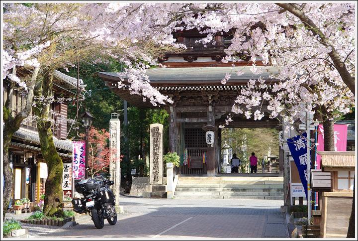 2016年4月5日 根尾谷の薄墨桜 (10)
