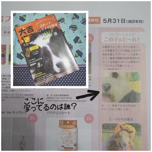 犬吉猫吉3