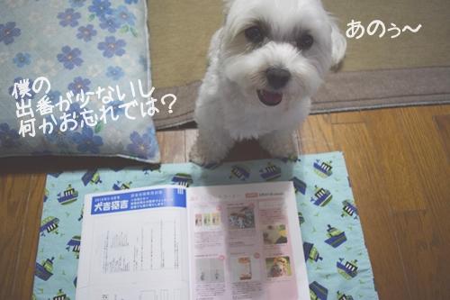 犬吉猫吉5