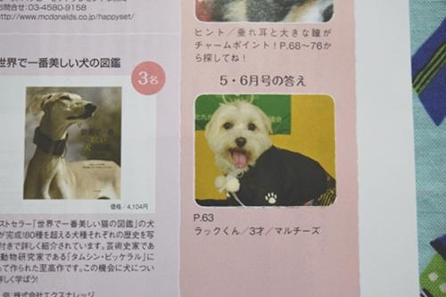 犬吉猫吉7