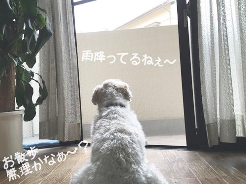 雨の休日1