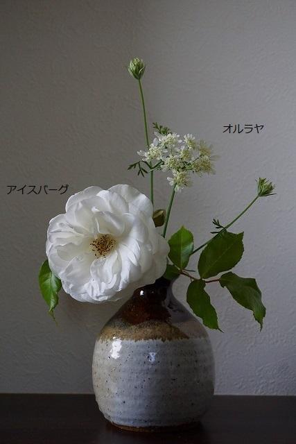 aDSC07595.jpg