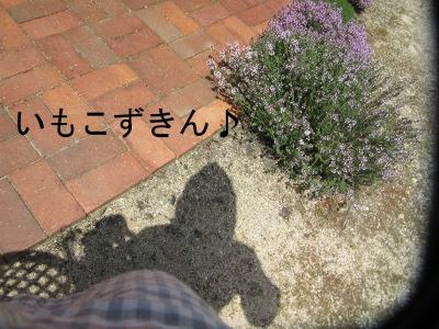 IMG_6394sd.jpg