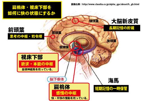 扁桃体・視床下部R