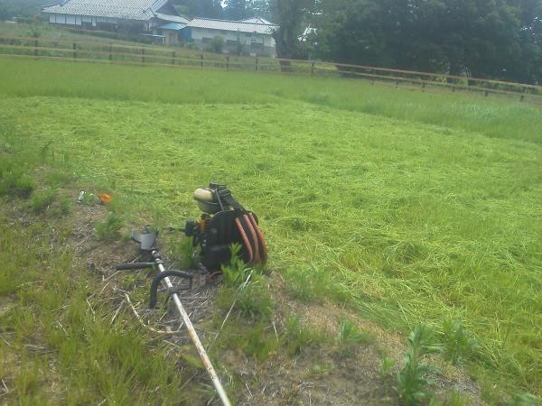 牧草の刈り取り