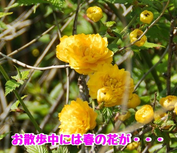 こんな花が
