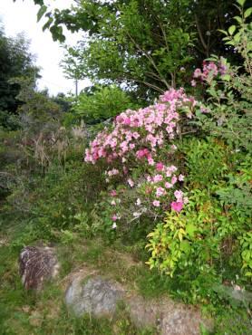 2016_05 25_2016、サツキの庭・1