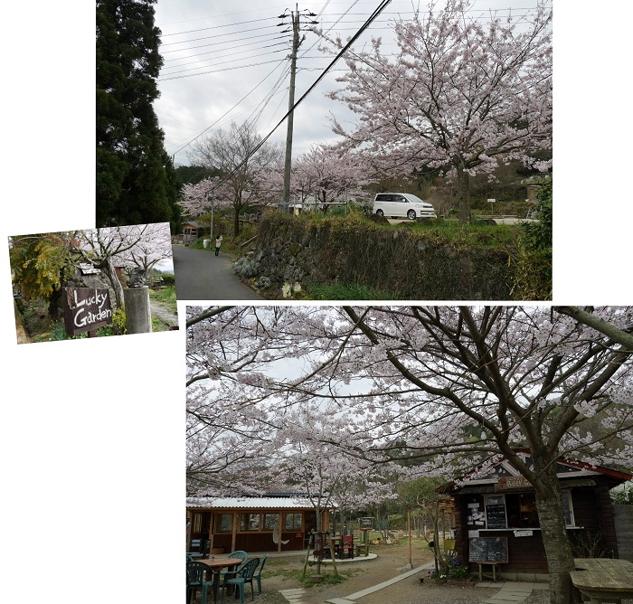 sakurasaku1604-008b.jpg