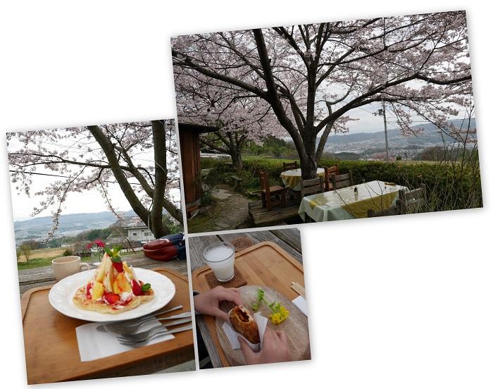 sakurasaku1604-010b.jpg