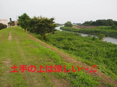 P7121434.jpg