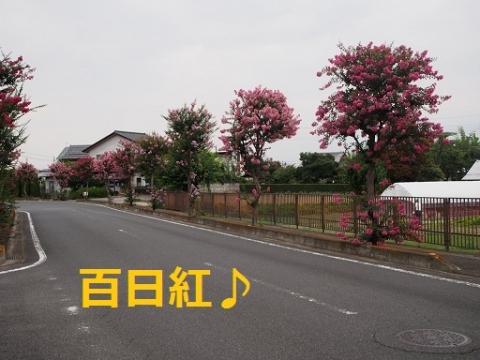 P7251956.jpg