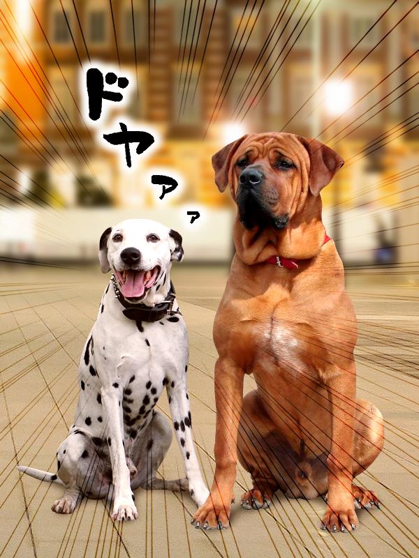 土佐犬とドヤマーチン