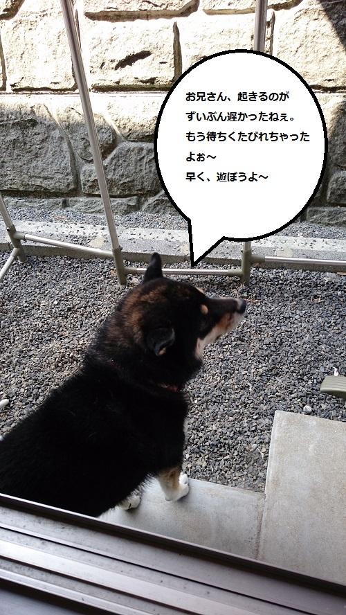 まるちゃん2016042403