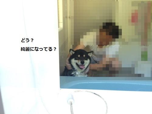 まるちゃん2016042502