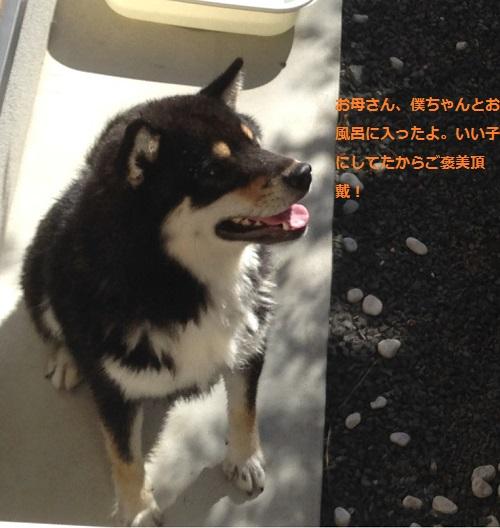 まるちゃん2016042503
