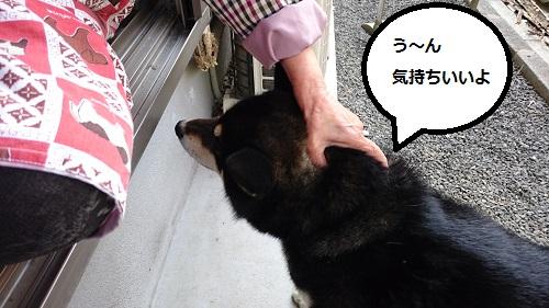 まるちゃん2016052404