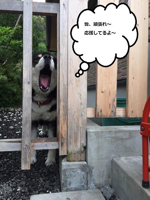 まるちゃん2016052804