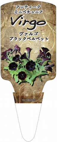 ペチュニア ヴァルゴ ブラックベルベット 育種 生産 販売 松原園芸 オリジナル品種