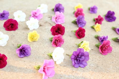 カリブラコア ティエルノ 八重咲き 育種 生産 販売 松原園芸 オリジナル品種