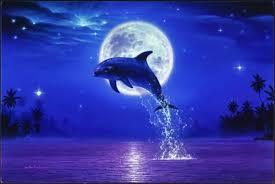イルカと月①