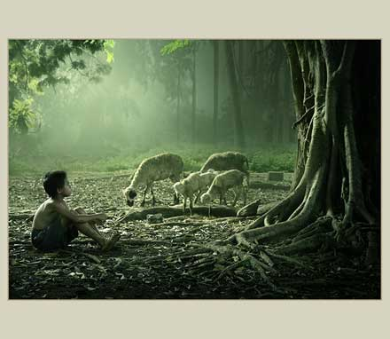 羊飼いの少年